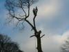 oak tree fenham carr lancaster